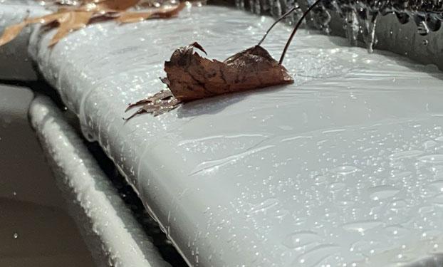 leaf on gutter guard